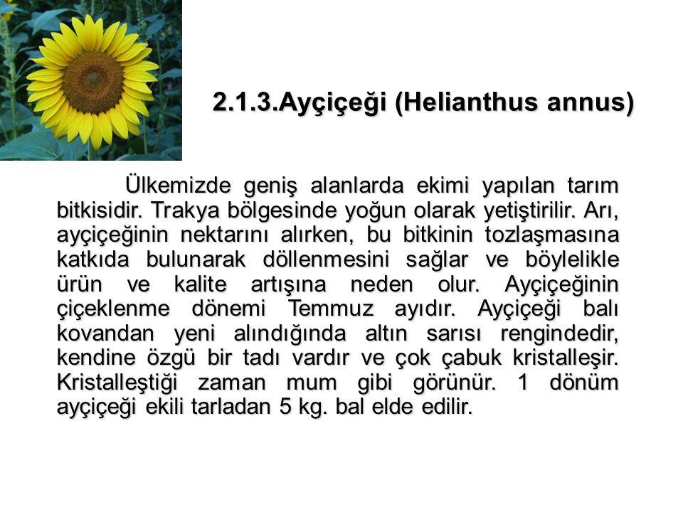 2.1.4.Beyaz Üçgül (Trifolium repens) Ekimi geniş alanlarda yapılan ve ülkemizde hayvan yemi olarak kullanılan önemli bir nektar bitkisidir.