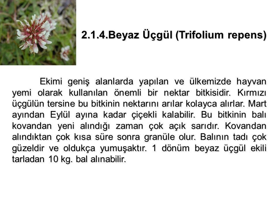 2.3.4.Yakı Otu (Epilobium angustifolium) Bu bitkinin 21 türü Türkiye de yetişmektedir.