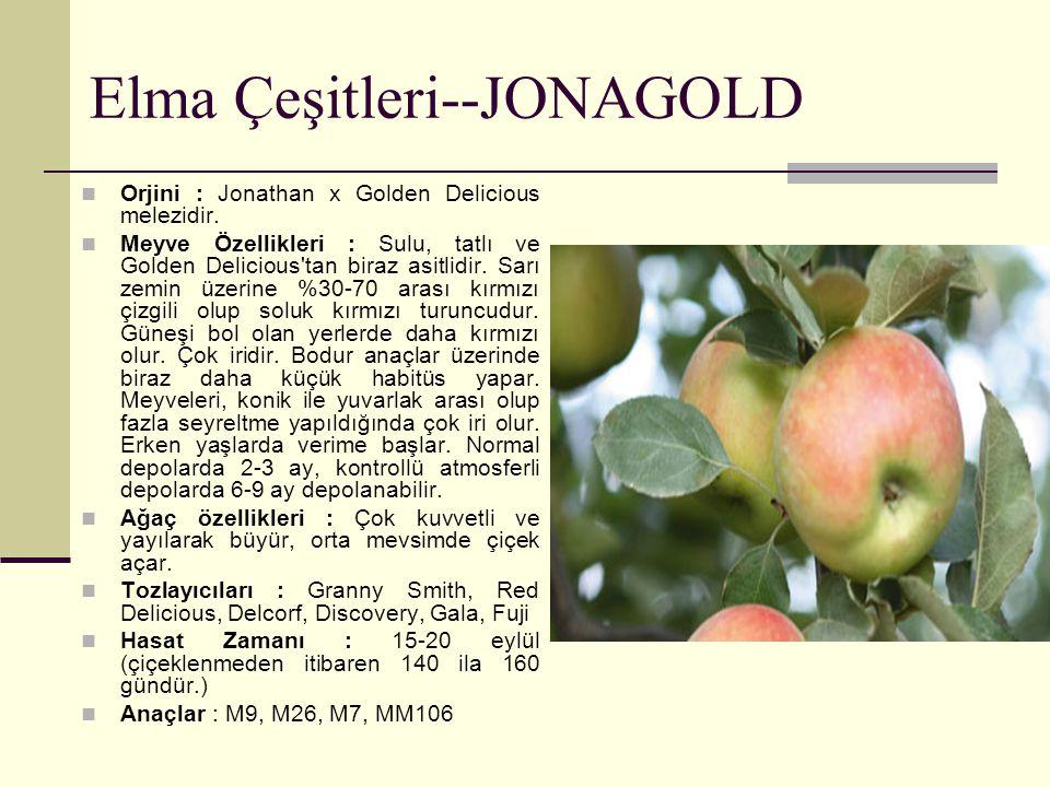 Elma Çeşitleri--JONAGOLD Orjini : Jonathan x Golden Delicious melezidir. Meyve Özellikleri : Sulu, tatlı ve Golden Delicious'tan biraz asitlidir. Sarı