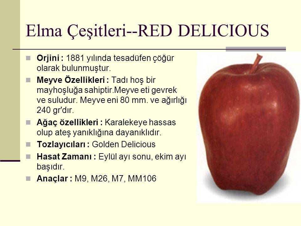 Elma Çeşitleri--RED DELICIOUS Orjini : 1881 yılında tesadüfen çöğür olarak bulunmuştur. Meyve Özellikleri : Tadı hoş bir mayhoşluğa sahiptir.Meyve eti