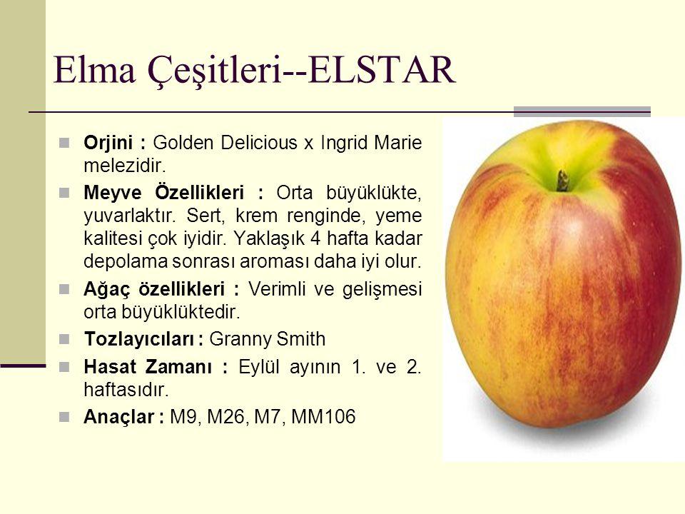 Elma Çeşitleri--ELSTAR Orjini : Golden Delicious x Ingrid Marie melezidir. Meyve Özellikleri : Orta büyüklükte, yuvarlaktır. Sert, krem renginde, yeme