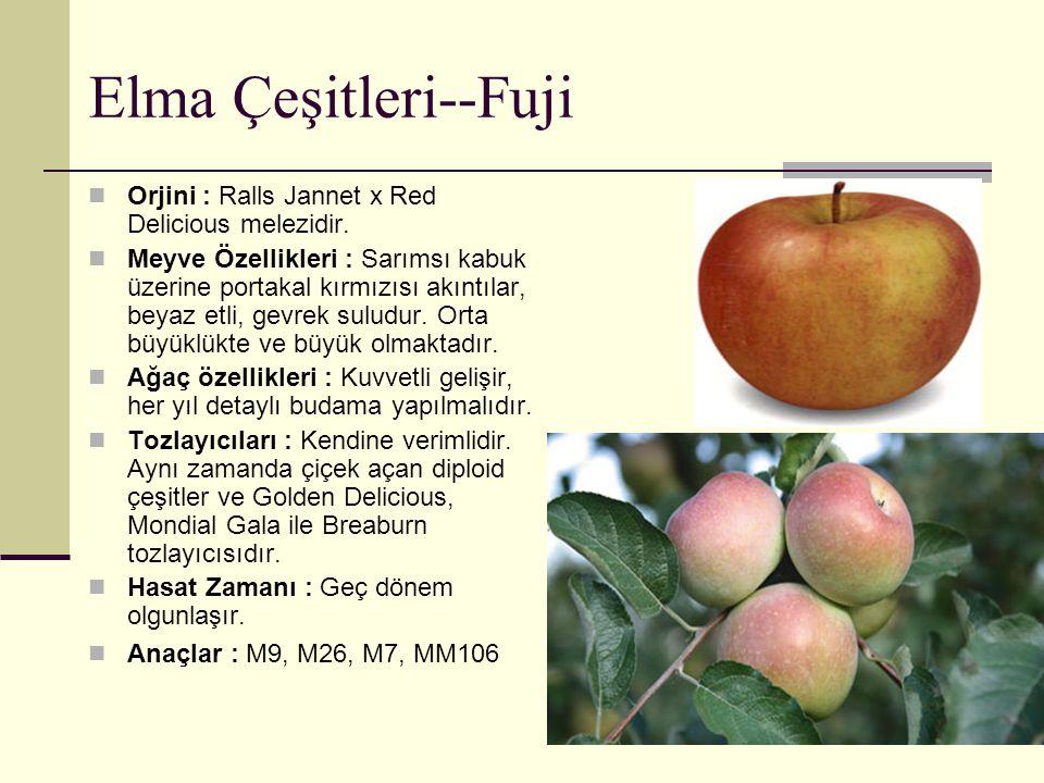 Elma Çeşitleri--Fuji Orjini : Ralls Jannet x Red Delicious melezidir. Meyve Özellikleri : Sarımsı kabuk üzerine portakal kırmızısı akıntılar, beyaz et