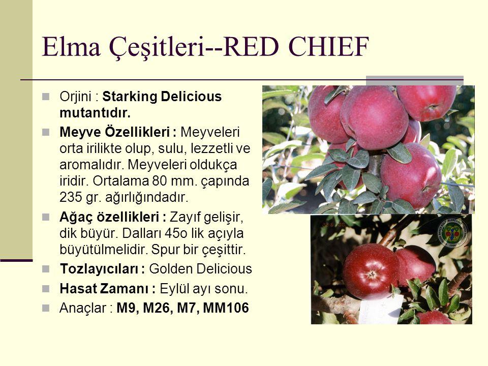 Elma Çeşitleri--RED CHIEF Orjini : Starking Delicious mutantıdır. Meyve Özellikleri : Meyveleri orta irilikte olup, sulu, lezzetli ve aromalıdır. Meyv