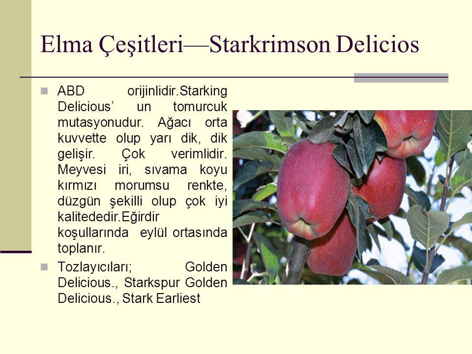 Elma Çeşitleri—Starkrimson Delicios ABD orijinlidir.Starking Delicious' un tomurcuk mutasyonudur. Ağacı orta kuvvette olup yarı dik, dik gelişir. Çok
