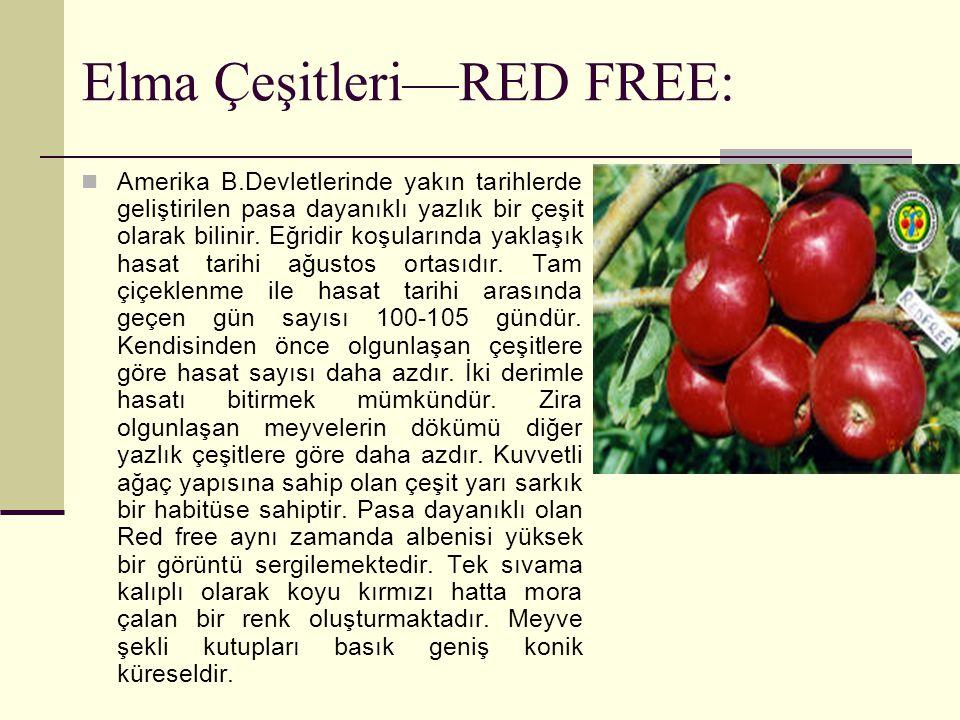 Elma Çeşitleri—RED FREE: Amerika B.Devletlerinde yakın tarihlerde geliştirilen pasa dayanıklı yazlık bir çeşit olarak bilinir. Eğridir koşularında yak