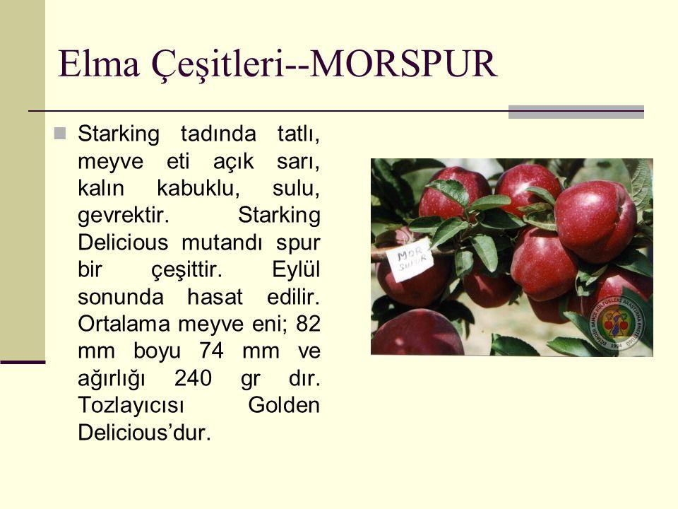 Elma Çeşitleri--MORSPUR Starking tadında tatlı, meyve eti açık sarı, kalın kabuklu, sulu, gevrektir. Starking Delicious mutandı spur bir çeşittir. Eyl