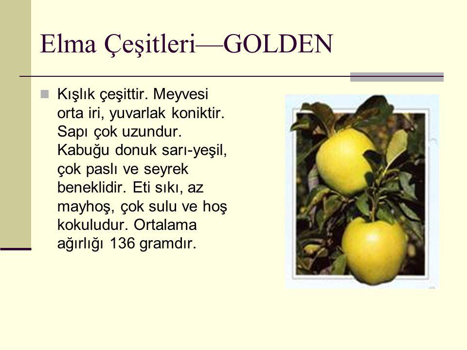 Elma Çeşitleri—GOLDEN Kışlık çeşittir. Meyvesi orta iri, yuvarlak koniktir. Sapı çok uzundur. Kabuğu donuk sarı-yeşil, çok paslı ve seyrek beneklidir.
