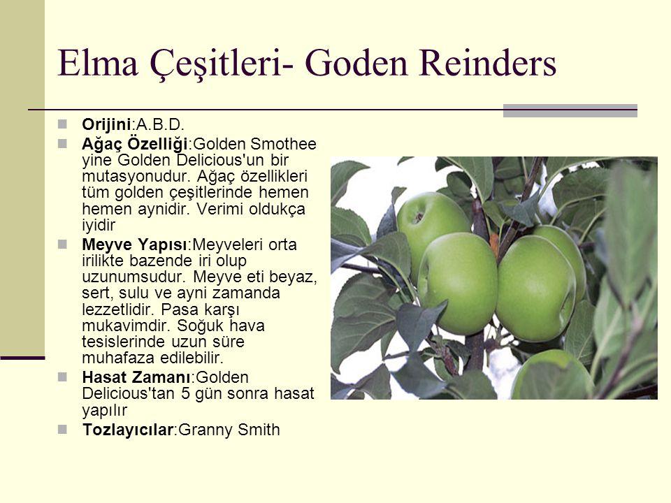 Elma Çeşitleri- Goden Reinders Orijini:A.B.D. Ağaç Özelliği:Golden Smothee yine Golden Delicious'un bir mutasyonudur. Ağaç özellikleri tüm golden çeşi