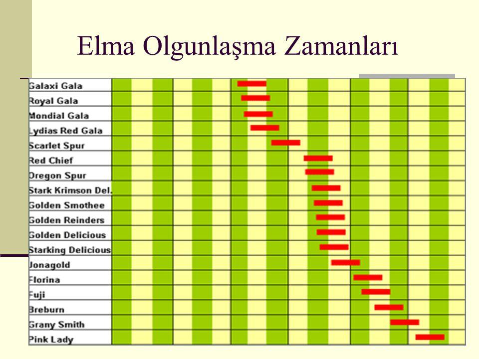 Elma Çeşitleri--BRAEBURN Orjini : Yeni Zellanda da 1952 yılında tesadüfen çöğür olarak bulunmuştur.