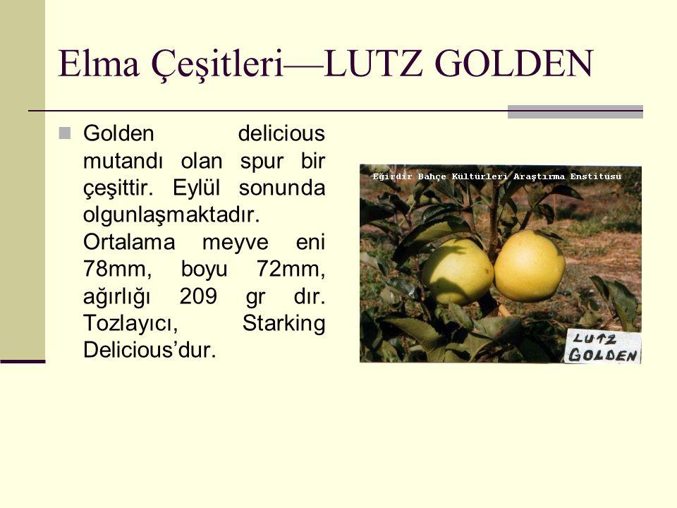 Elma Çeşitleri—LUTZ GOLDEN Golden delicious mutandı olan spur bir çeşittir. Eylül sonunda olgunlaşmaktadır. Ortalama meyve eni 78mm, boyu 72mm, ağırlı