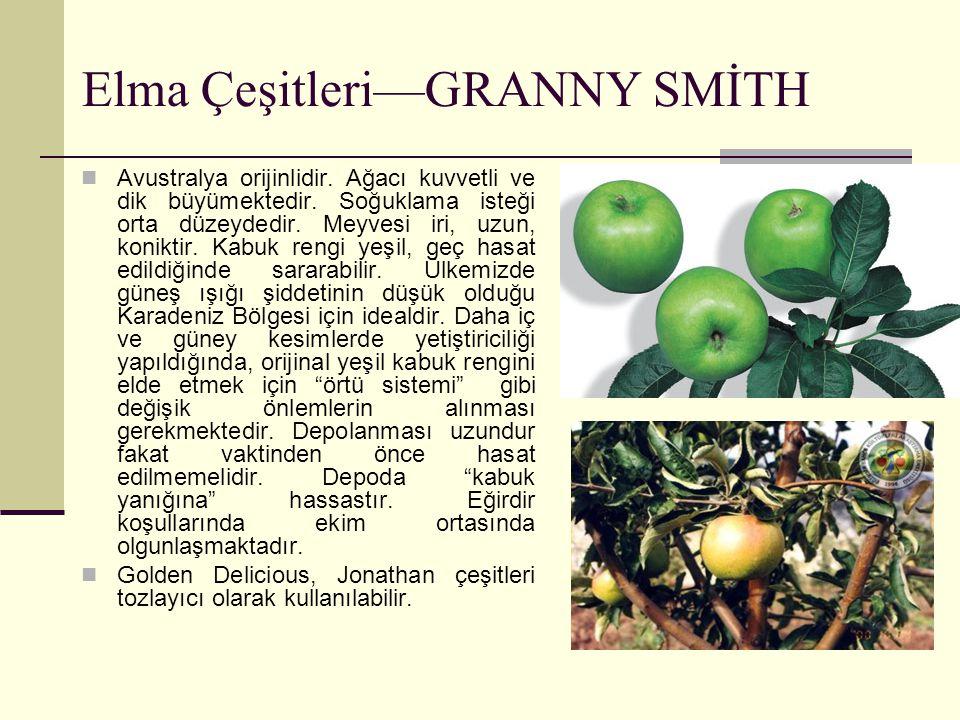 Elma Çeşitleri—GRANNY SMİTH Avustralya orijinlidir. Ağacı kuvvetli ve dik büyümektedir. Soğuklama isteği orta düzeydedir. Meyvesi iri, uzun, koniktir.