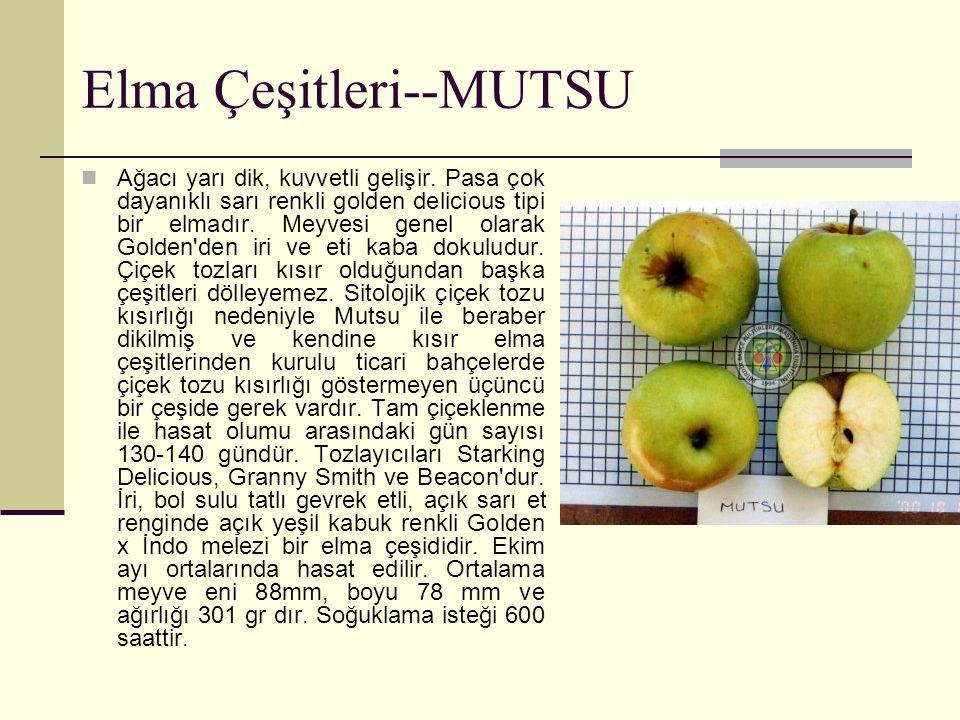 Elma Çeşitleri--MUTSU Ağacı yarı dik, kuvvetli gelişir. Pasa çok dayanıklı sarı renkli golden delicious tipi bir elmadır. Meyvesi genel olarak Golden'