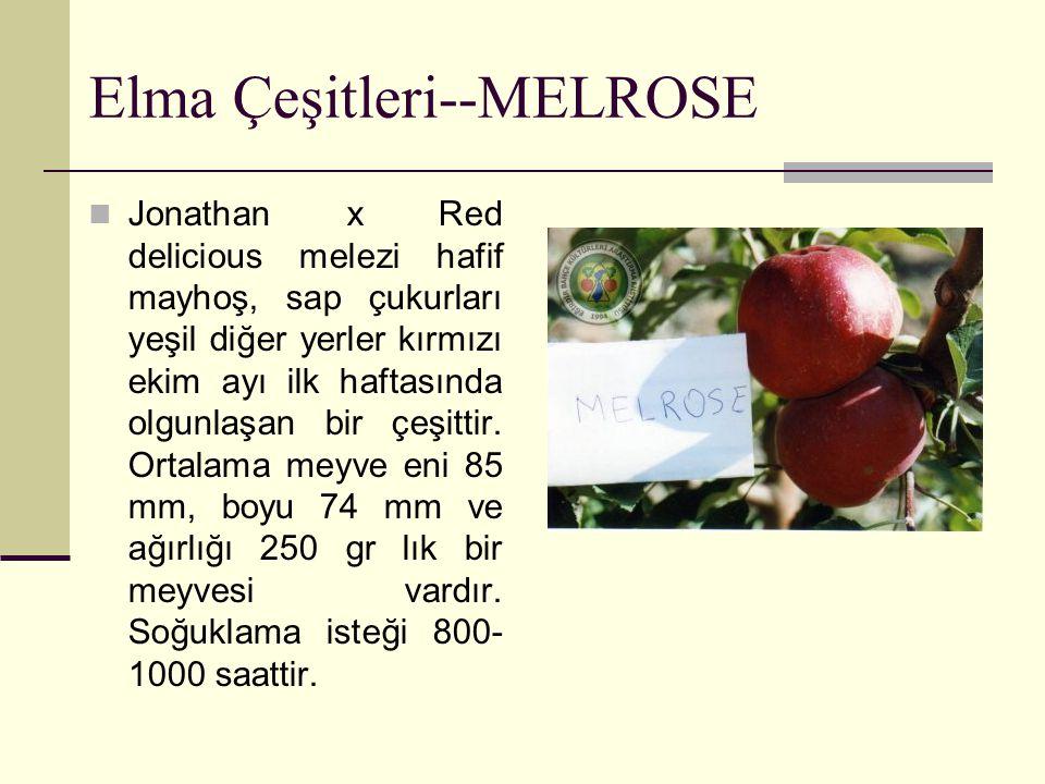 Elma Çeşitleri--MELROSE Jonathan x Red delicious melezi hafif mayhoş, sap çukurları yeşil diğer yerler kırmızı ekim ayı ilk haftasında olgunlaşan bir