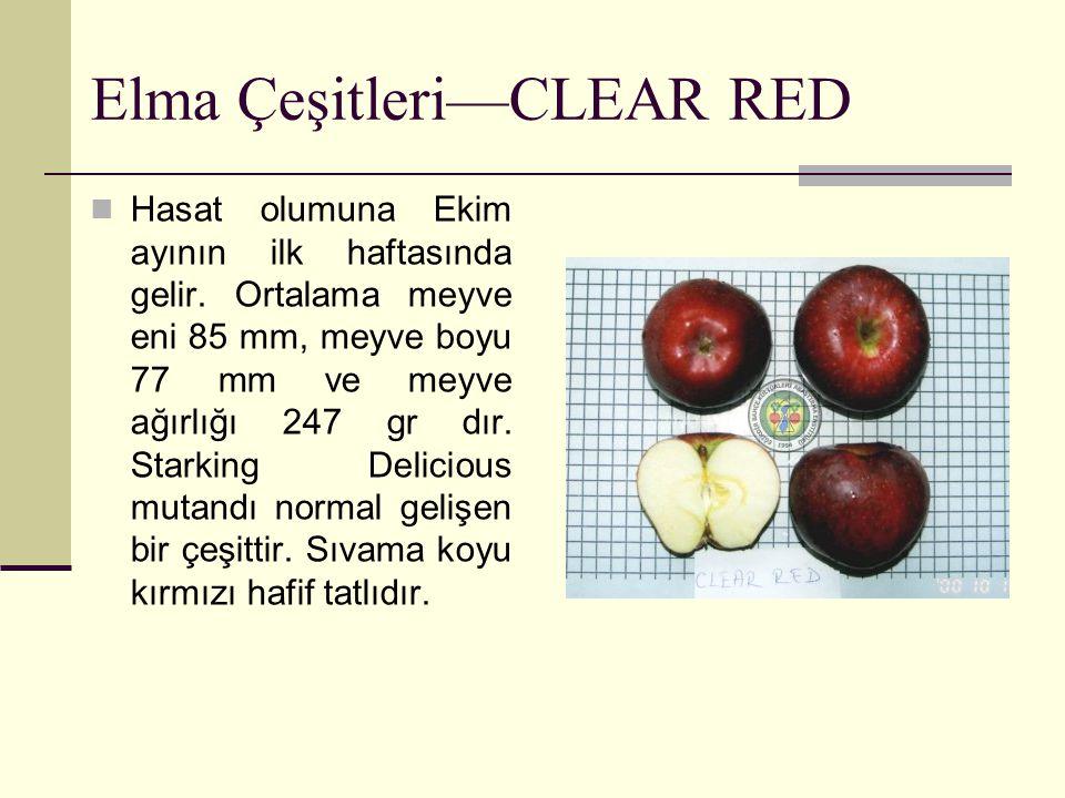 Elma Çeşitleri—CLEAR RED Hasat olumuna Ekim ayının ilk haftasında gelir. Ortalama meyve eni 85 mm, meyve boyu 77 mm ve meyve ağırlığı 247 gr dır. Star