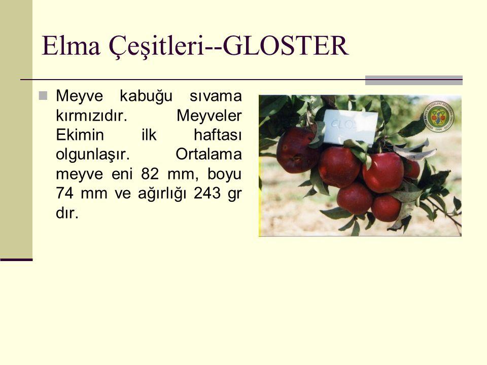Elma Çeşitleri--GLOSTER Meyve kabuğu sıvama kırmızıdır. Meyveler Ekimin ilk haftası olgunlaşır. Ortalama meyve eni 82 mm, boyu 74 mm ve ağırlığı 243 g