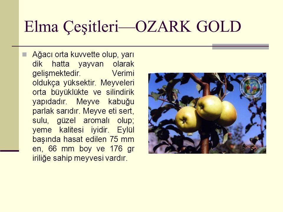 Elma Çeşitleri—OZARK GOLD Ağacı orta kuvvette olup, yarı dik hatta yayvan olarak gelişmektedir. Verimi oldukça yüksektir. Meyveleri orta büyüklükte ve
