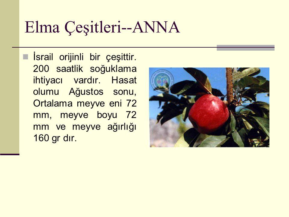 Elma Çeşitleri--ANNA İsrail orijinli bir çeşittir. 200 saatlik soğuklama ihtiyacı vardır. Hasat olumu Ağustos sonu, Ortalama meyve eni 72 mm, meyve bo