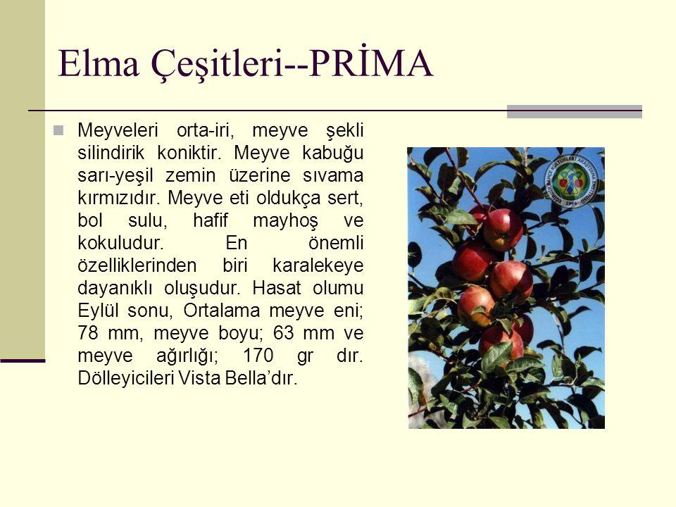 Elma Çeşitleri--PRİMA Meyveleri orta-iri, meyve şekli silindirik koniktir. Meyve kabuğu sarı-yeşil zemin üzerine sıvama kırmızıdır. Meyve eti oldukça