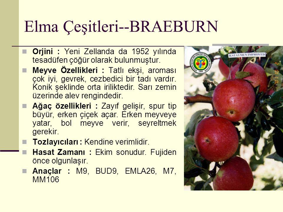 Elma Çeşitleri--BRAEBURN Orjini : Yeni Zellanda da 1952 yılında tesadüfen çöğür olarak bulunmuştur. Meyve Özellikleri : Tatlı ekşi, aroması çok iyi, g