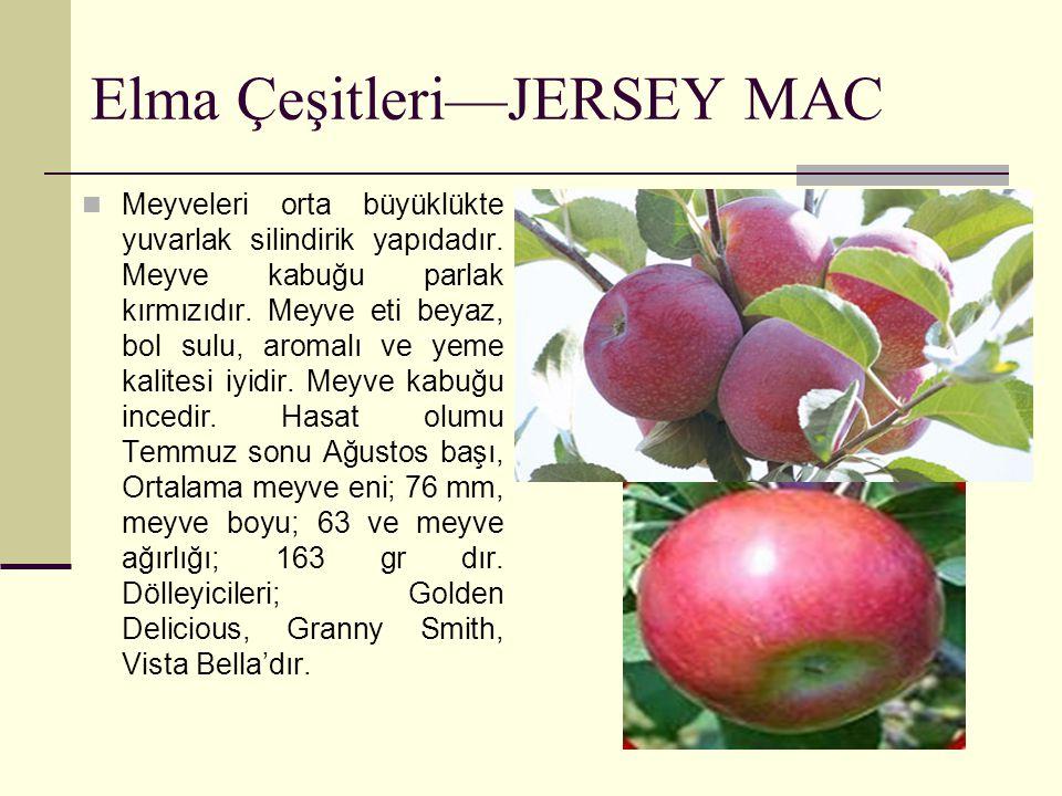 Elma Çeşitleri—JERSEY MAC Meyveleri orta büyüklükte yuvarlak silindirik yapıdadır. Meyve kabuğu parlak kırmızıdır. Meyve eti beyaz, bol sulu, aromalı