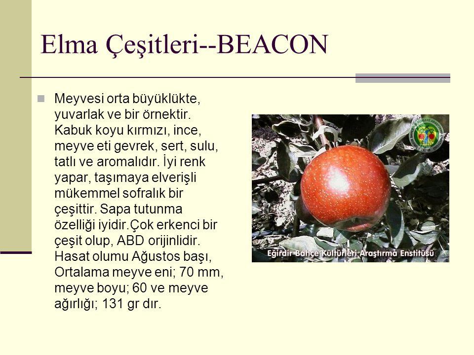 Elma Çeşitleri--BEACON Meyvesi orta büyüklükte, yuvarlak ve bir örnektir. Kabuk koyu kırmızı, ince, meyve eti gevrek, sert, sulu, tatlı ve aromalıdır.