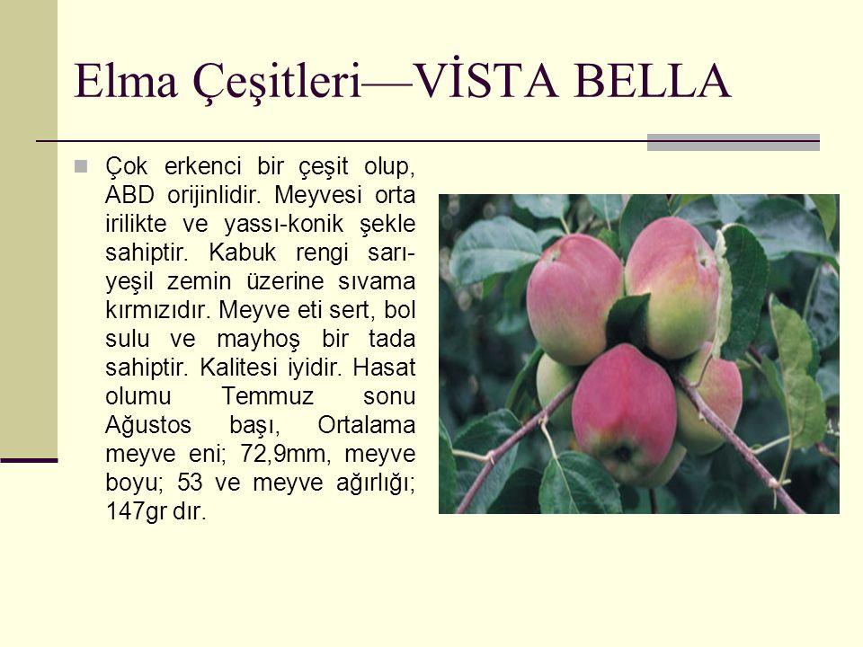 Elma Çeşitleri—VİSTA BELLA Çok erkenci bir çeşit olup, ABD orijinlidir. Meyvesi orta irilikte ve yassı-konik şekle sahiptir. Kabuk rengi sarı- yeşil z