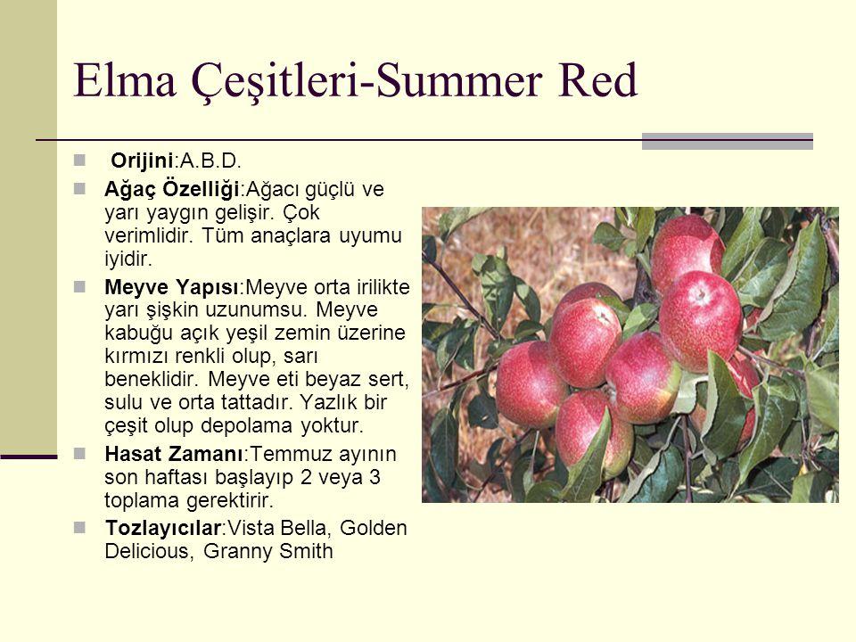 Elma Çeşitleri-Summer Red Orijini:A.B.D. Ağaç Özelliği:Ağacı güçlü ve yarı yaygın gelişir. Çok verimlidir. Tüm anaçlara uyumu iyidir. Meyve Yapısı:Mey