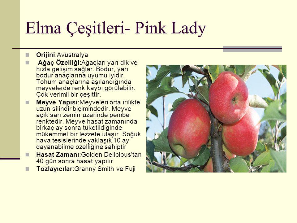 Elma Çeşitleri- Pink Lady Orijini:Avustralya Ağaç Özelliği:Ağaçları yarı dik ve hızla gelişim sağlar. Bodur, yarı bodur anaçlarına uyumu iyidir. Tohum
