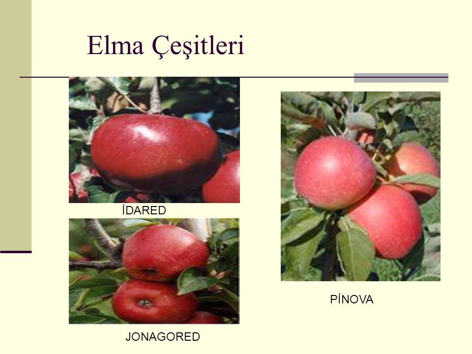 Elma Çeşitleri İDARED JONAGORED PİNOVA