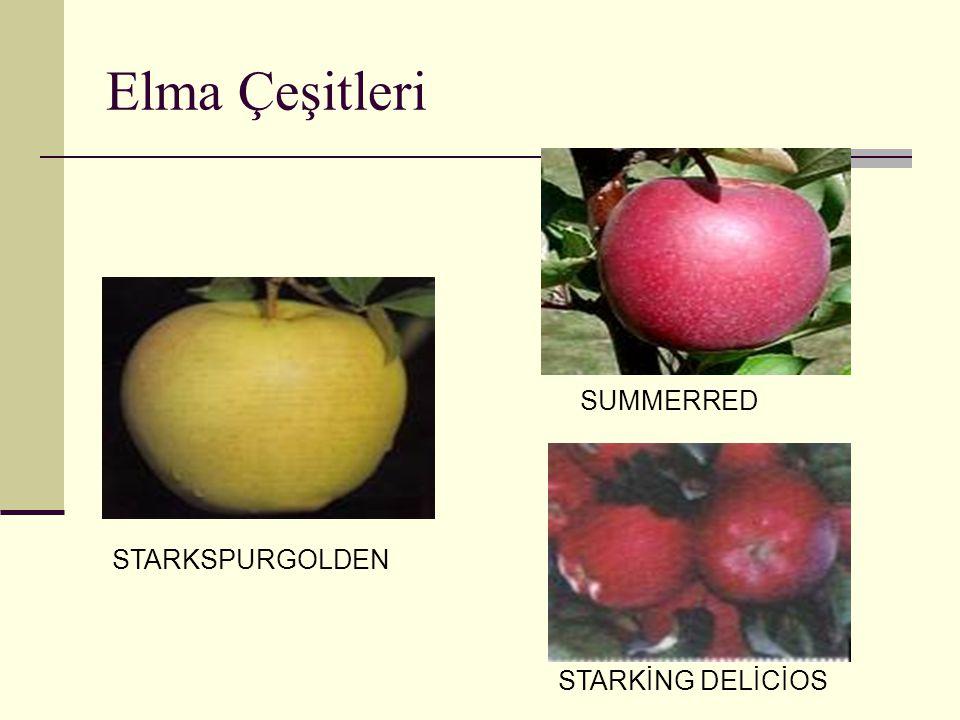 Elma Çeşitleri STARKSPURGOLDEN SUMMERRED STARKİNG DELİCİOS