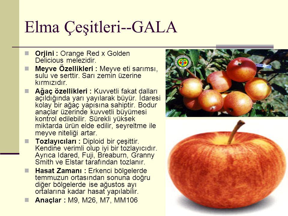 Elma Çeşitleri--GALA Orjini : Orange Red x Golden Delicious melezidir. Meyve Özellikleri : Meyve eti sarımsı, sulu ve serttir. Sarı zemin üzerine kırm