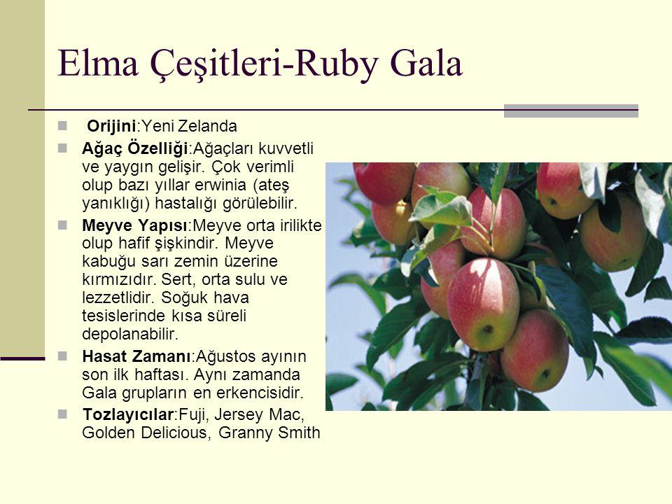 Elma Çeşitleri-Ruby Gala Orijini:Yeni Zelanda Ağaç Özelliği:Ağaçları kuvvetli ve yaygın gelişir. Çok verimli olup bazı yıllar erwinia (ateş yanıklığı)