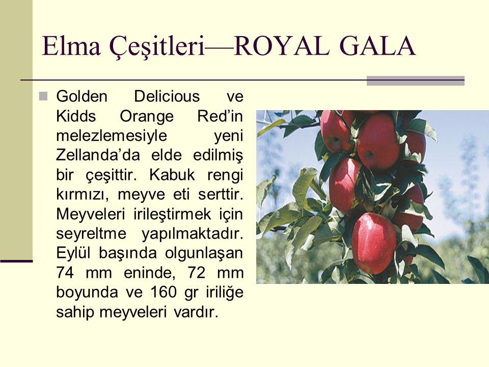 Elma Çeşitleri—ROYAL GALA Golden Delicious ve Kidds Orange Red'in melezlemesiyle yeni Zellanda'da elde edilmiş bir çeşittir. Kabuk rengi kırmızı, meyv