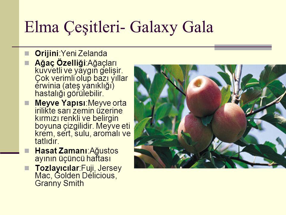 Elma Çeşitleri- Galaxy Gala Orijini:Yeni Zelanda Ağaç Özelliği:Ağaçları kuvvetli ve yaygın gelişir. Çok verimli olup bazı yıllar erwinia (ateş yanıklı