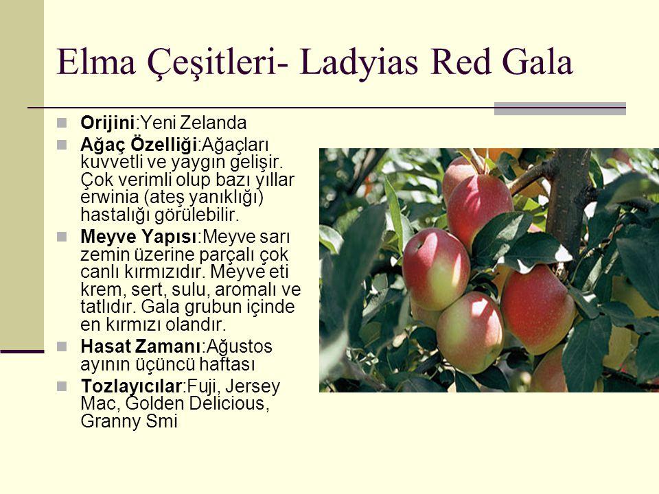 Elma Çeşitleri- Ladyias Red Gala Orijini:Yeni Zelanda Ağaç Özelliği:Ağaçları kuvvetli ve yaygın gelişir. Çok verimli olup bazı yıllar erwinia (ateş ya