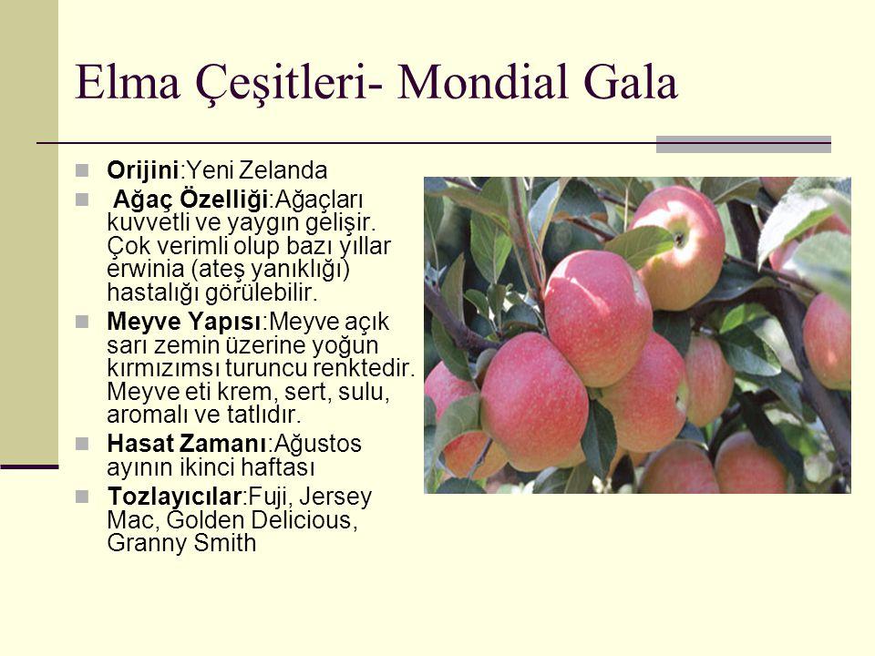 Elma Çeşitleri- Mondial Gala Orijini:Yeni Zelanda Ağaç Özelliği:Ağaçları kuvvetli ve yaygın gelişir. Çok verimli olup bazı yıllar erwinia (ateş yanıkl