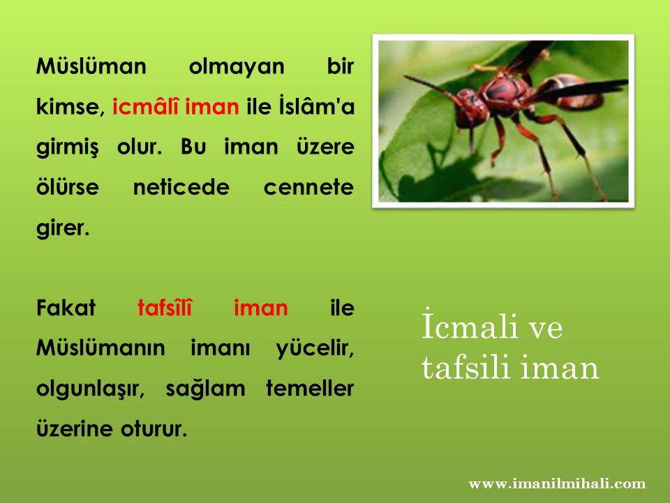 Müslüman olmayan bir kimse, icmâlî iman ile İslâm'a girmiş olur. Bu iman üzere ölürse neticede cennete girer. Fakat tafsîlî iman ile Müslümanın imanı
