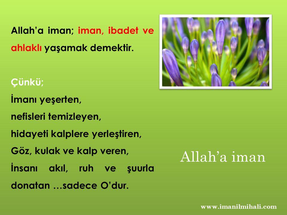 www.imanilmihali.com Allah'a iman; iman, ibadet ve ahlaklı yaşamak demektir. Çünkü; İmanı yeşerten, nefisleri temizleyen, hidayeti kalplere yerleştire