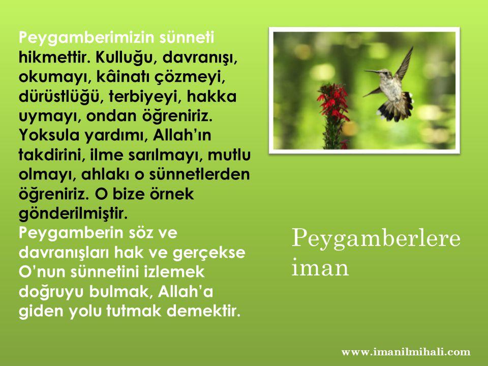 www.imanilmihali.com Peygamberimizin sünneti hikmettir.