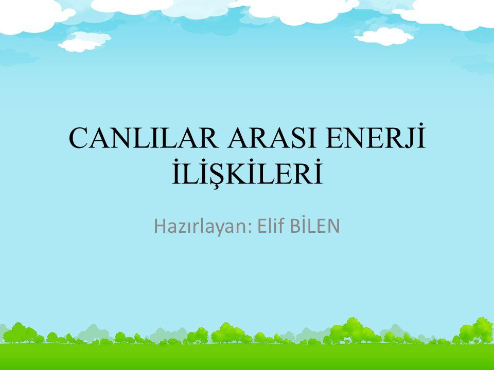 Hazırlayan: Elif BİLEN22