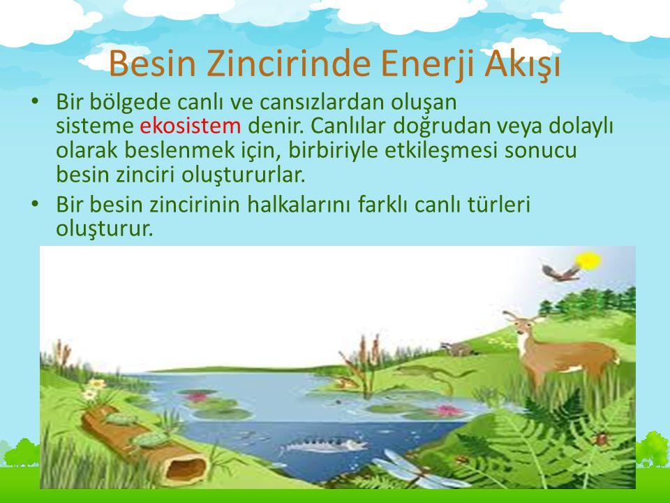 Besin Zincirinde Enerji Akışı Bir bölgede canlı ve cansızlardan oluşan sisteme ekosistem denir. Canlılar doğrudan veya dolaylı olarak beslenmek için,