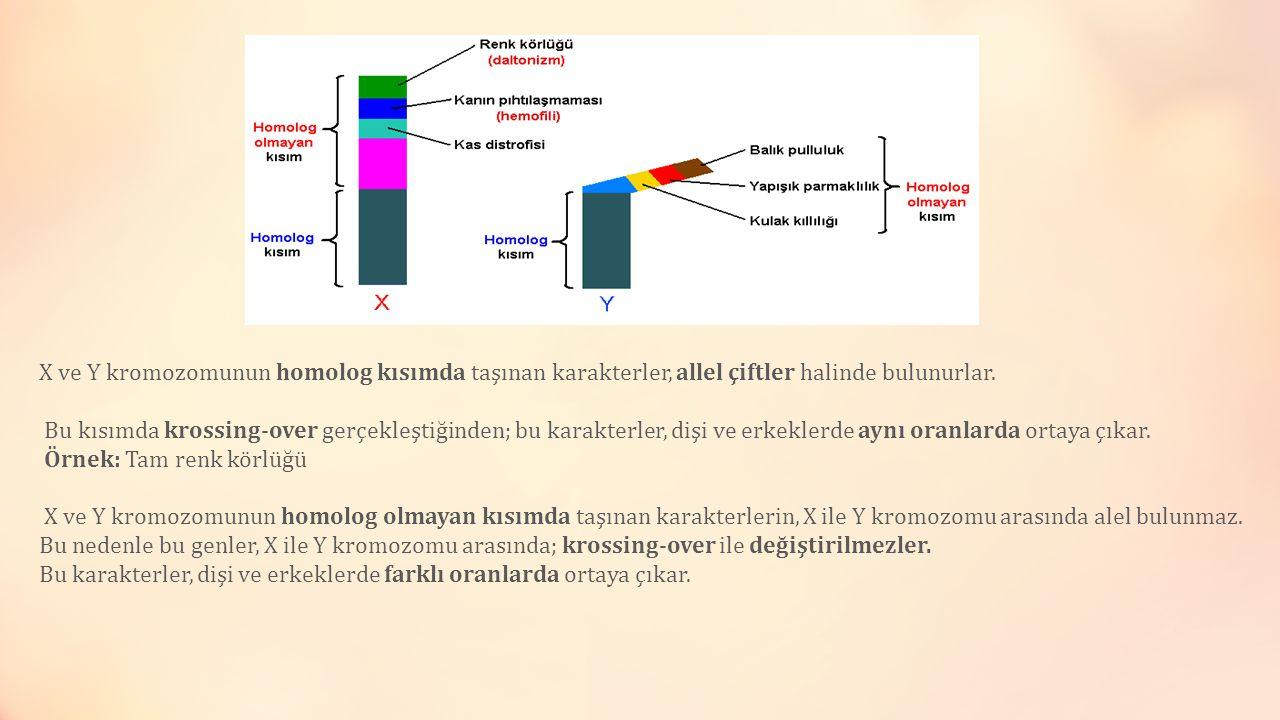 X ve Y kromozomunun homolog kısımda taşınan karakterler, allel çiftler halinde bulunurlar. Bu kısımda krossing-over gerçekleştiğinden; bu karakterler,