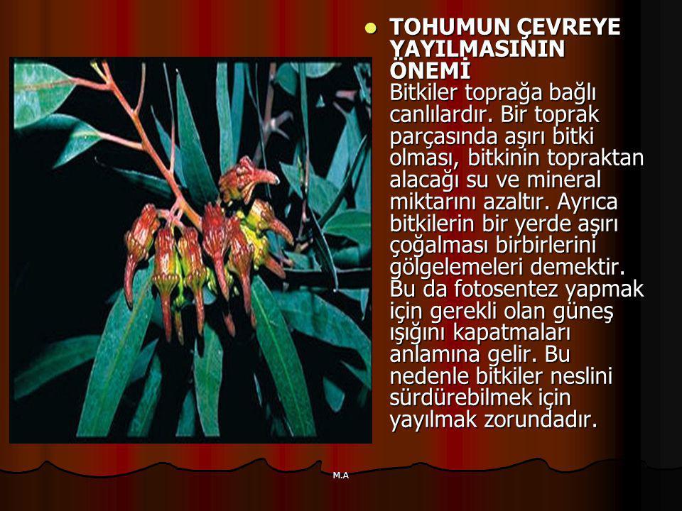 TOHUMUN ÇEVREYE YAYILMASININ ÖNEMİ Bitkiler toprağa bağlı canlılardır.