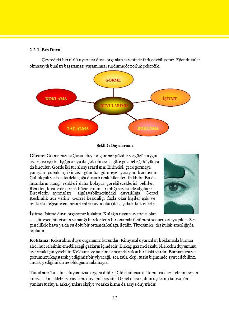 Şekil 2: Duyularımız Görme: Görmemizi sağlayan duyu organımız gözdür ve gözün uygun uyarıcısı ışıktır. Işığın az ya da çok olmasına göre göz bebeği bü