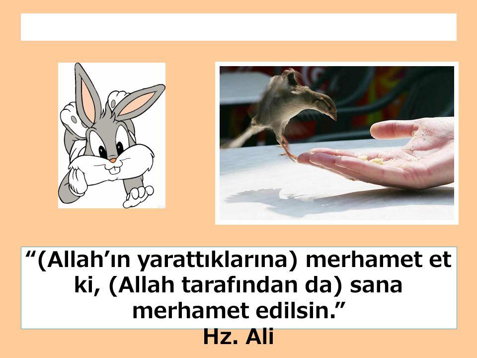 """""""(Allah'ın yarattıklarına) merhamet et ki, (Allah tarafından da) sana merhamet edilsin."""" Hz. Ali"""