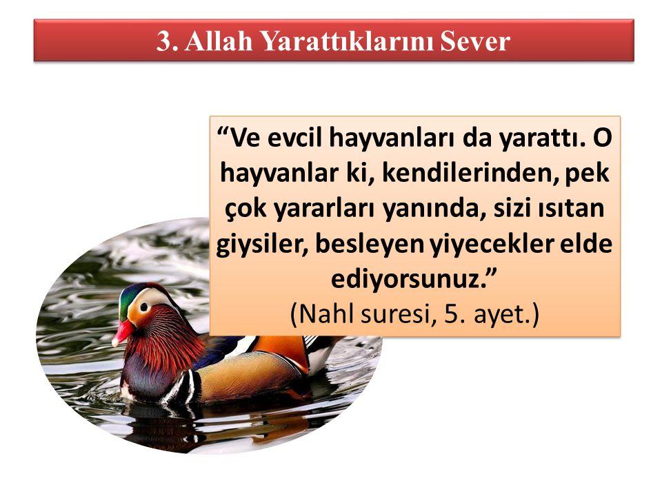"""3. Allah Yarattıklarını Sever """"Ve evcil hayvanları da yarattı. O hayvanlar ki, kendilerinden, pek çok yararları yanında, sizi ısıtan giysiler, besleye"""
