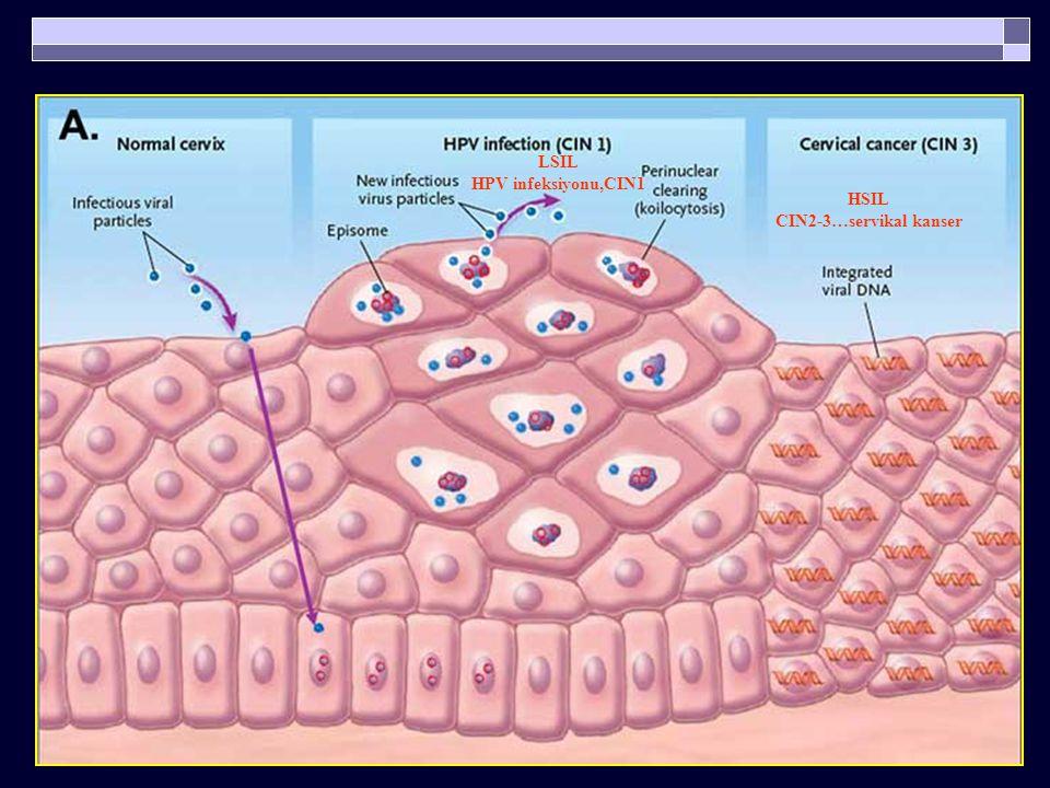 Onkogenik HPV Gen Ürünleri ve İşlevleri İnsan konakçı hücresinde hücre siklusu kontrolünü bozarlar  E6 p53 yıkımı  E7 RB fonksiyonel inhibisyonu  P