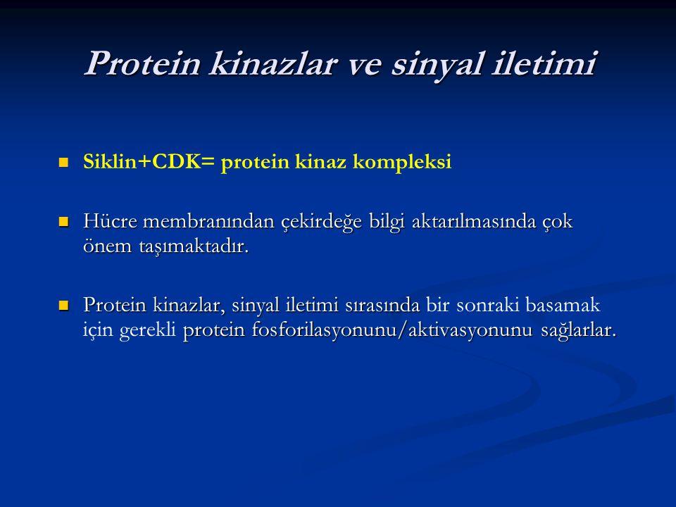 Protein kinazlar ve sinyal iletimi Siklin+CDK= protein kinaz kompleksi Hücre membranından çekirdeğe bilgi aktarılmasında çok önem taşımaktadır. Hücre