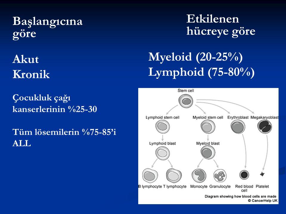 Başlangıcına göre Etkilenen hücreye göre Myeloid (20-25%) Lymphoid (75-80%) Akut Kronik Çocukluk çağı kanserlerinin %25-30 Tüm lösemilerin %75-85'i AL