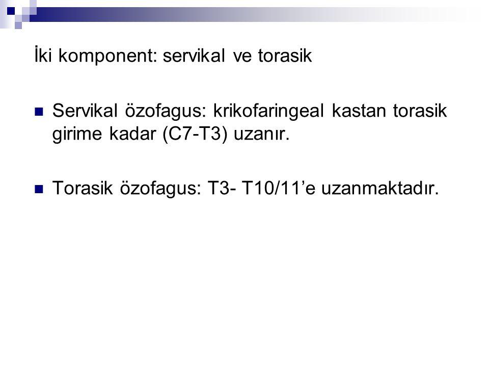 İki komponent: servikal ve torasik Servikal özofagus: krikofaringeal kastan torasik girime kadar (C7-T3) uzanır. Torasik özofagus: T3- T10/11'e uzanma